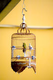 Caged Bird, Singapore Stock Photography