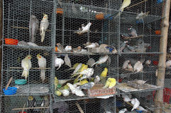 Caged Birds. Sale caged birds on the footpath of Kolkata Royalty Free Stock Images