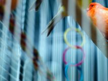 Caged birds. Birds in a cage, lonely feelings royalty free stock photo