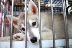 Caged dog Royalty Free Stock Photography