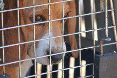 Caged dog stock photos
