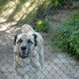 Caged dog Royalty Free Stock Images