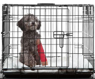 Caged dog with broken leg. In a cast royalty free stock image