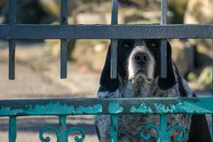 Caged dog portrait looking at you stock photos