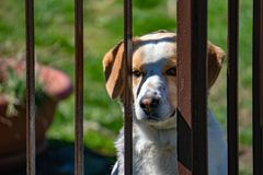 Caged dog portrait looking at you royalty free stock photography