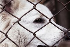 Caged dog, with sad face. dog in shelter eyes of an abandoned animal stock photo