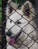 Caged dog, with sad face. dog in shelter eyes of an abandoned animal royalty free stock image