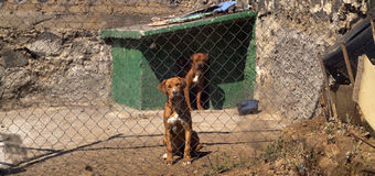 Caged dogs Royalty Free Stock Photo