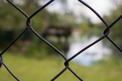 Caged förälskelse Royaltyfria Foton