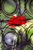 Caged flower Stock Images