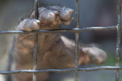 Caged hand Stock Photos