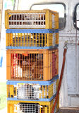 Caged hens and chickens to be sold to the market Stock Photography