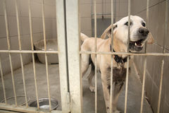 Caged hund i ett pund Royaltyfri Fotografi