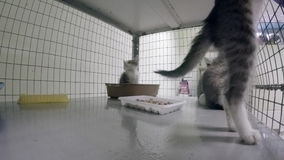 Caged kittens in an animal shelter stock footage