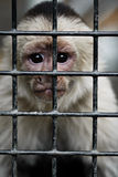 Caged Monkey Stock Image