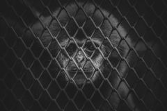 Caged Monkey Royalty Free Stock Photos