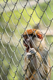 Caged monkey Stock Photos