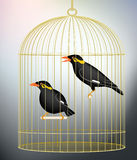 Caged myna birds. Editable  illustration of a pair of caged hill myna birds made with gradient meshes Royalty Free Stock Photography