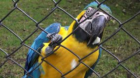 Caged Parrots, Birds, Animals, Wildlife, Nature stock video footage