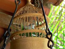 Caged Pet Bird. A pet bird kept in a wooden cage Stock Photo