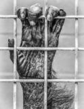 Caged primate hand grapping cage. Caged primate hand close up showing fur, palm and finger nails grasping wire enclosure in black and white stock photos