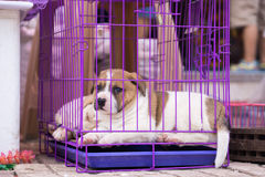 Caged puppy in China Royalty Free Stock Images