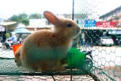 Caged rabbits Royalty Free Stock Photos
