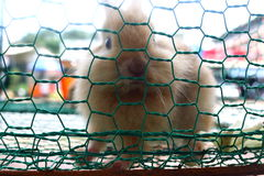 Caged rabbits Stock Photography