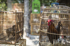 Caged rooster ready to sell at street market in Yogjakarta, Indo Stock Photography