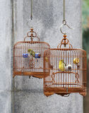 Caged song birds. In the Yuen Po Street Bird Garden in Kowloon, Hong Kong Royalty Free Stock Photo
