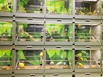 Cages à oiseaux dans le magasin de bêtes Images libres de droits