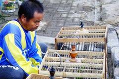 Cages à oiseaux de nettoyage Photographie stock
