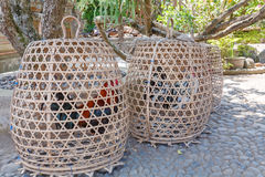 Cages with Fighting Cocks, Indonesia Royalty Free Stock Images