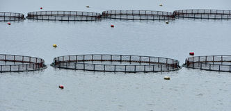 Cages for fish farming Royalty Free Stock Photography
