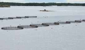 Cages for fish farming. In Baltic Sea, Aland Islands Royalty Free Stock Photos