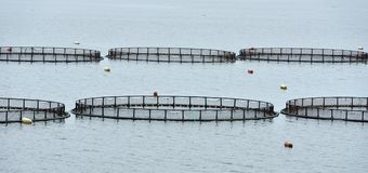 Cages for fish farming in Baltic Sea Stock Photography