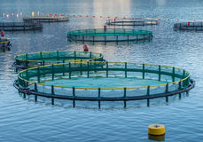 Cages for fish farming. Big Cages for fish farming in Montenegro Royalty Free Stock Photos
