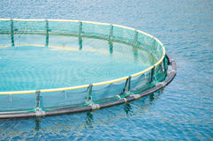 Cages for fish farming Stock Photography