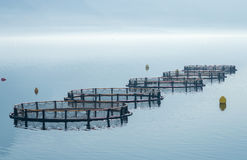 Cages for fish farming Royalty Free Stock Images