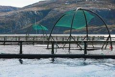 Cages norvégiennes d'exploitation de pisciculture pour l'élevage saumoné Image libre de droits