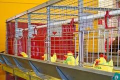 Cages pour des animaux Image libre de droits