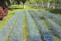 Cages used for catching crabs. Crab net on the grass to dry Stock Photos