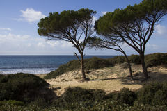 CAGLIARI: Praia ao sul de Sardinia - mar do pintau Fotografia de Stock