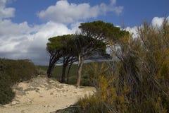CAGLIARI: Strandzuiden van Sardinige - pintauoverzees - Sardinige Royalty-vrije Stock Afbeeldingen