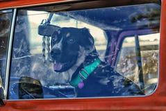 Cagnolino che conduce furgone giù la strada dopo l'erosione del proprietario fotografie stock libere da diritti