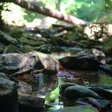 Cahaba-Fluss Lizenzfreies Stockbild