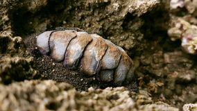 Cahuita& x27 ; fossile de s Images stock