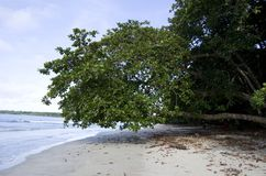 Cahuita National Park beach, Costa Rica. Cahuita National Park is a terrestrial and marine national park in the Caribbean La Amistad Conservation Area of Costa Royalty Free Stock Image