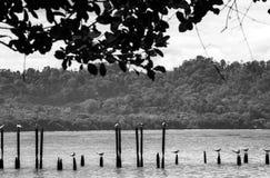 Cahuita park narodowy - Costa Rica Obraz Stock