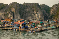 Cai Beo floating village on sunset in Ha Long Bay Royalty Free Stock Image